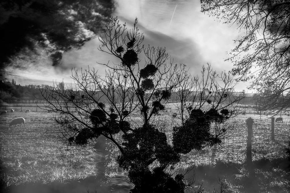 'Versailles, WS-IV' by Nizar M. Halloun © Attribution Non commercial Share Alike